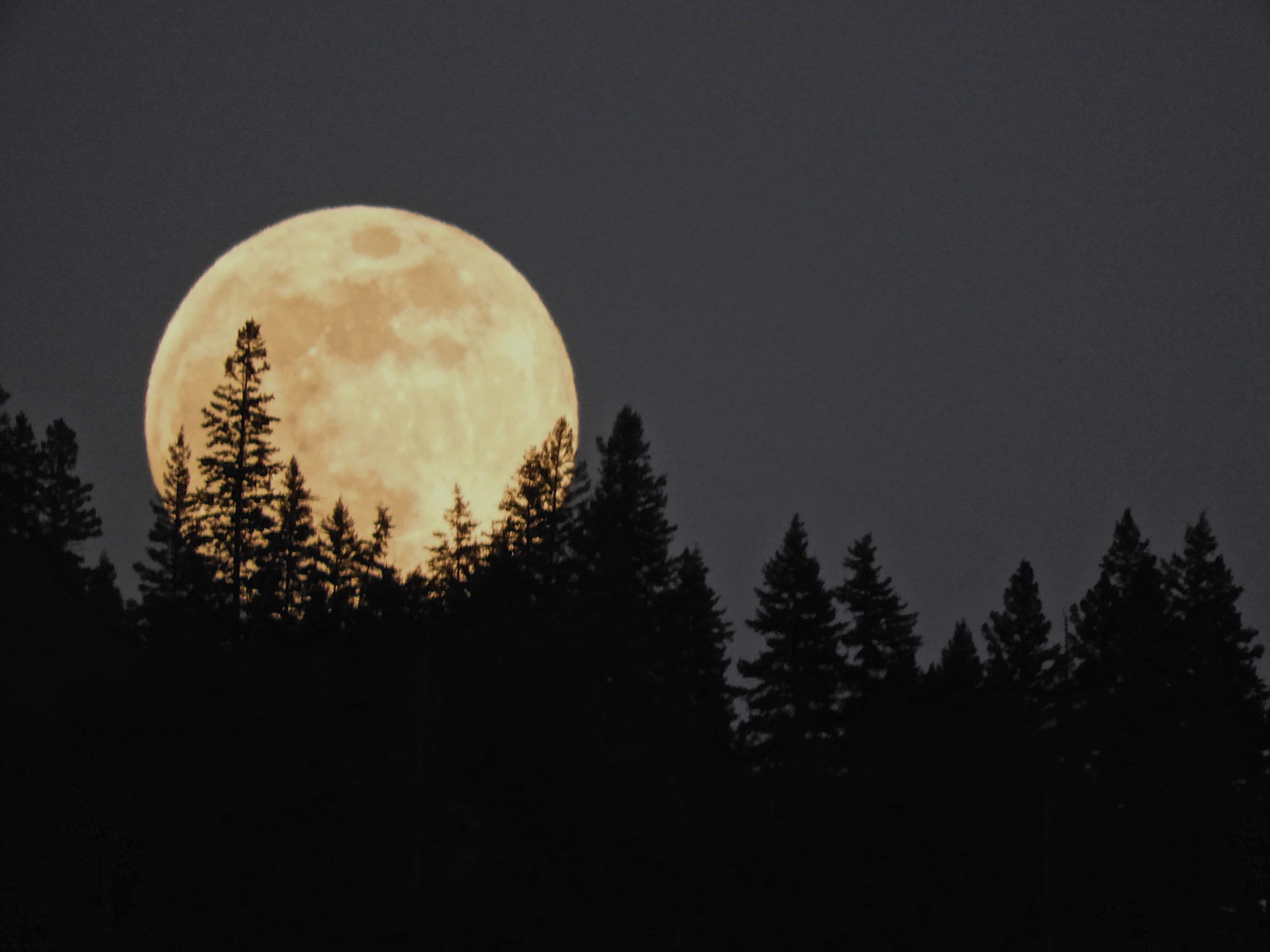moon-rising-over-the-forest-YXUYQNH
